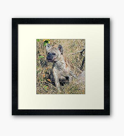 Hyena Framed Print