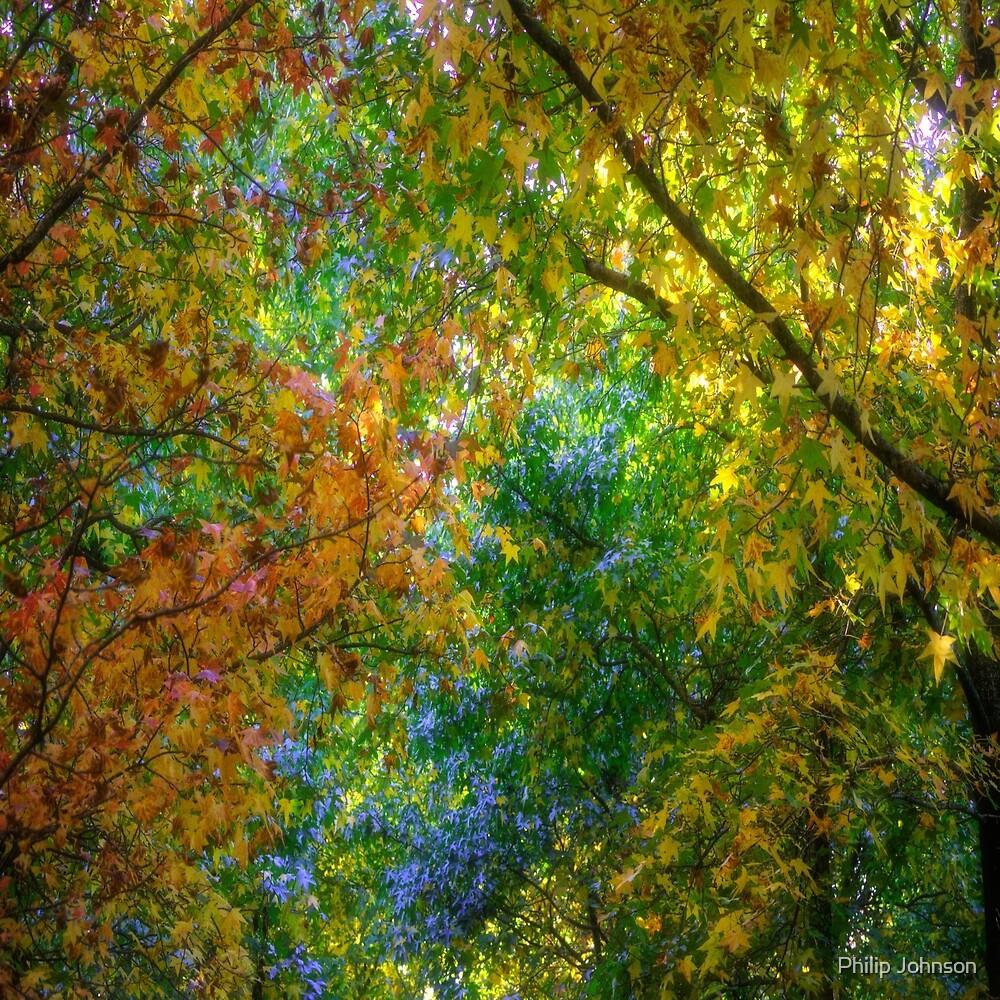 Autumn Canopy - Mount Wilson NSW by Philip Johnson