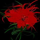 Red flower black by mjvision Mia Niemi by mjvisiondesign