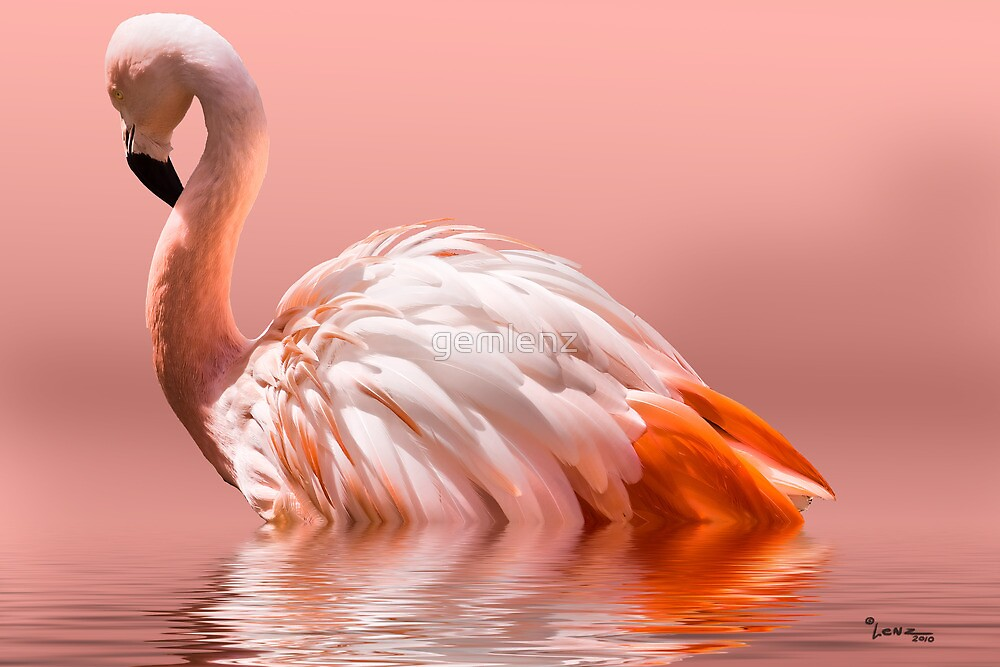 Flamingo-2010 by George Lenz