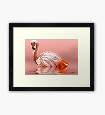 Flamingo-2010 Framed Print