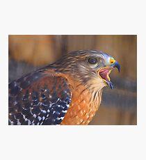 Red Shoulder Hawk Photographic Print