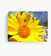 Pollination Series ~ 1 Canvas Print