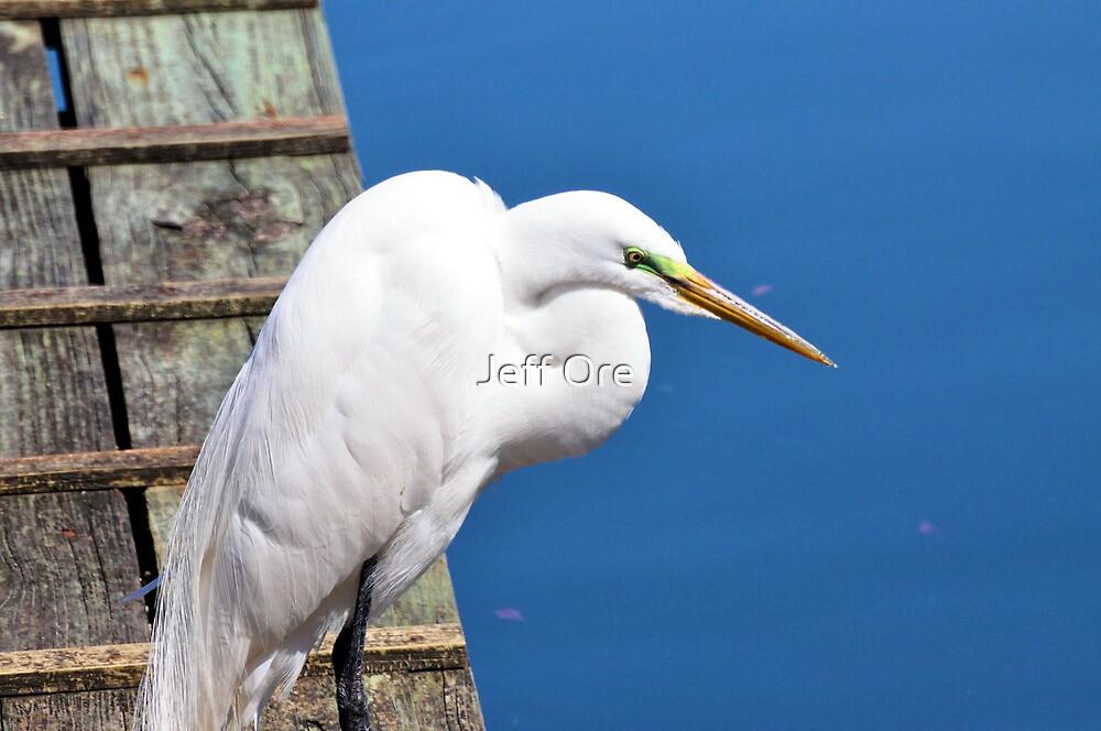 Great Egret by Jeff Ore