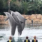 Orlando, FL: Discovery Cove Dolphins Jumping Next to Kids by tpfmiller