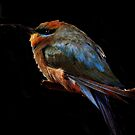 Bird of many colours by Clive