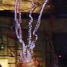 Las Vegas, NV: Jellyfish by tpfmiller