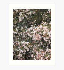native flowers girraween Art Print