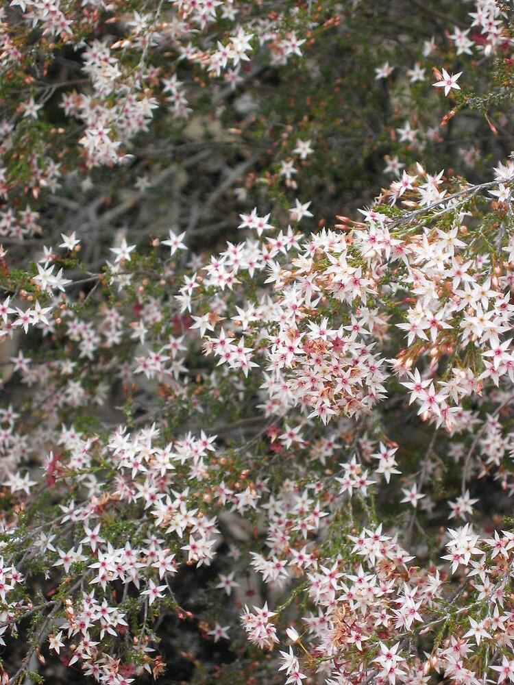 native flowers girraween by Aprel Dawes