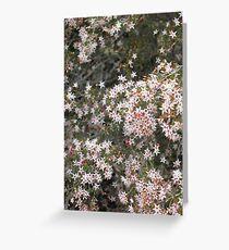 native flowers girraween Greeting Card