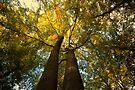 Canopy of Leaves by Nigel Bangert