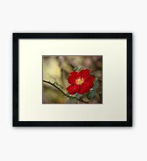 A rose etc. Framed Print