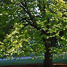 Elm Tree by Aleksander