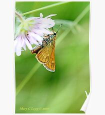 Small Skipper, Thymelicus sylvestris Poster