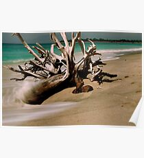 Driftwood - Gilli Islands, Indonesia Poster