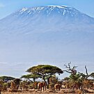 Kilimanjaro Elephants - Amboseli National Park, Kenya by Scott Ward