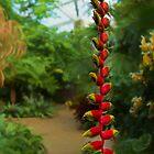 Heliconia at Daniel Stowe Botanic Garden by Marilyn Cornwell