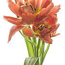 Sweet Tulips by Ann Garrett