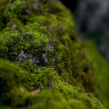 Moss on a rock by TokyoLuv