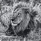 The Mighty Lion Has Fallen in Black and White by Kay Brewer