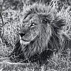 Der mächtige Löwe ist in Schwarz und Weiß gefallen von Kay Brewer
