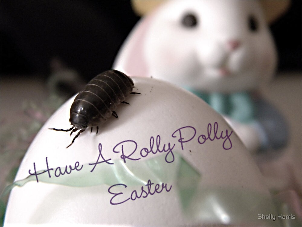 Have A Rolly Polly Easter by Shelly Harris