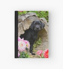 Lab puppy playing hide and seek Hardcover Journal