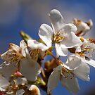 Spring by Richard Skoropat