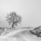 Frandy Tree, Glendevon by ShinyPhoto
