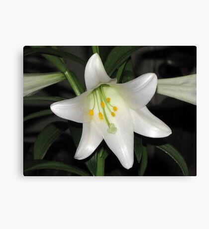 Birthday Lily Canvas Print