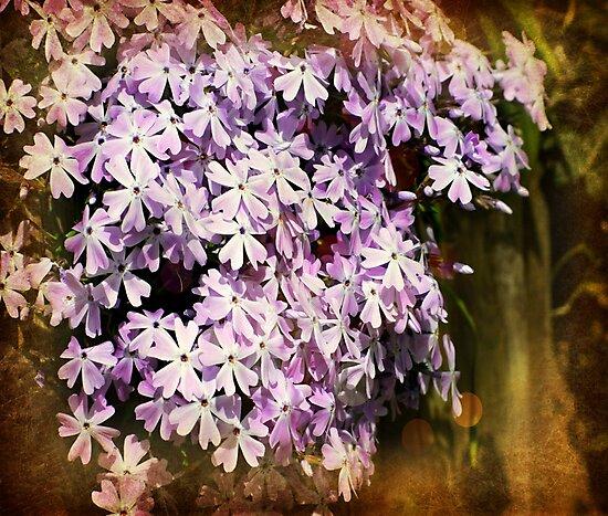 Garden Phlox by ScenicViewPics