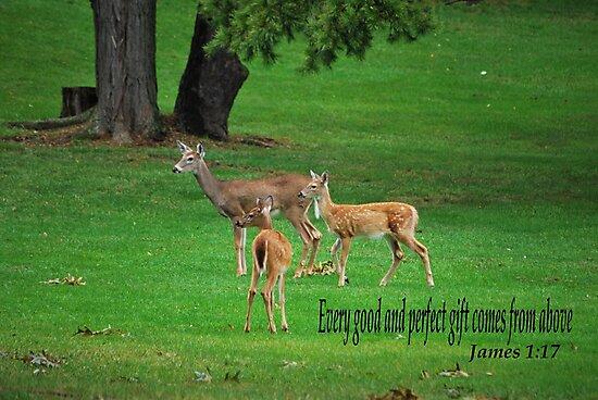 James 1:17 by Bob Sample