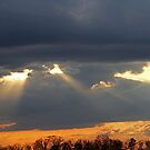 Eyes in the Sky by Terri~Lynn Bealle