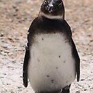 sweet penguin by eelsblueEllen