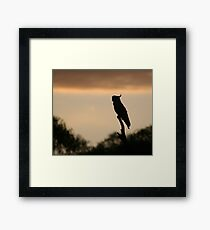 Cockatoo in the early morning - Upper Plenty Framed Print