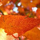 autumn in macro by Jan Stead JEMproductions