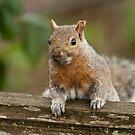 A Squirrel in Spring by David Friederich