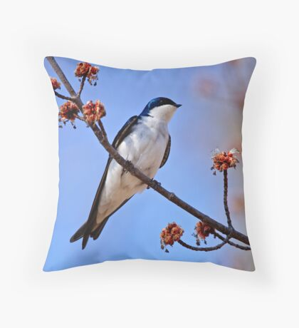 Tree Swallow on Red Maple Branch - Ottawa Ontario Throw Pillow