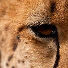 Cheetah Eye, Close Up by Tom Grieve
