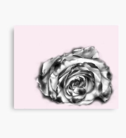 I was dreaming of a rose Canvas Print