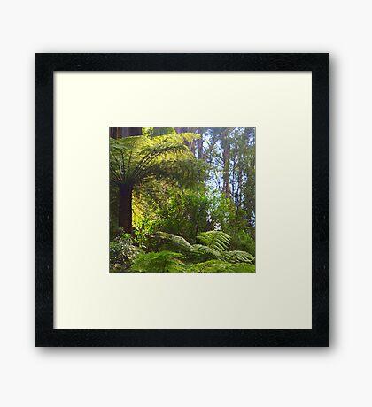 A ferny glade awaits... Framed Print