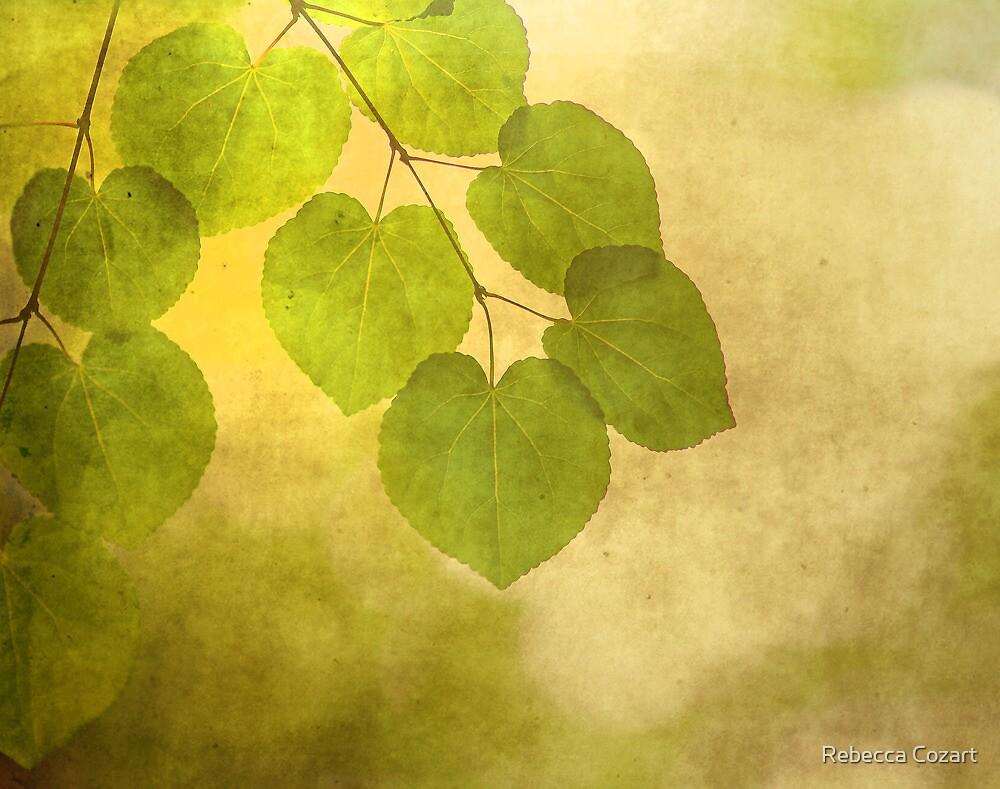 Framed in Light by Rebecca Cozart