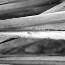 Black and White Nature Triptych III by Kathie Nichols