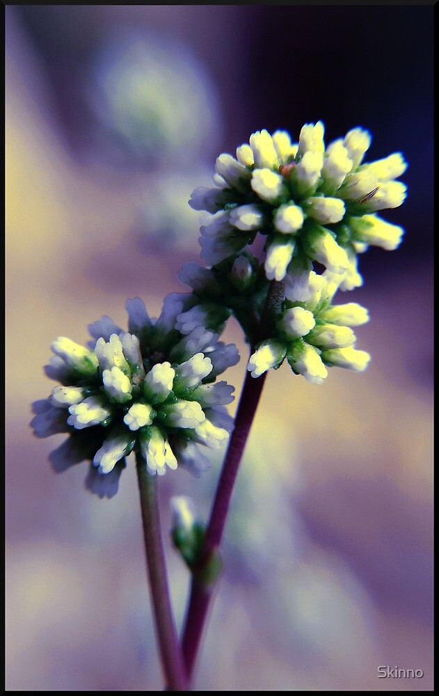 Growing - Spring's Flowers by Skinno