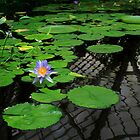 Water Lily With Reflections by Bonnie M. Follett