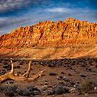 Desert Country Arizona by Kathy Weaver