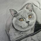 Amber in a bag by Jill Tisbury
