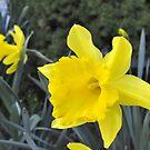 Ahhhhh... Spring...  (Hershey, PA) by Corkle
