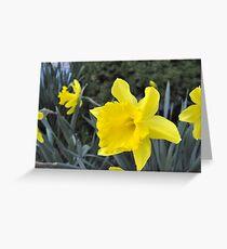 Ahhhhh... Spring...  (Hershey, PA) Greeting Card