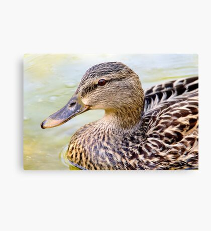 Female Mallard - Close up Canvas Print